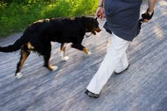 A dog walk. On rocky road Royalty Free Stock Photography