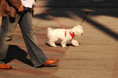 Dog Walk Stock Images