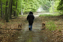 Dog walk. A woman from behind on a walk with her dogs through the forest. Image taken outside in fall after rain stock photos