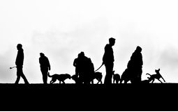 Dog walk. Silhouettes of dogs and people Royalty Free Stock Images