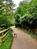 Dog walk royalty free stock photos