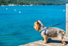 Dog Walk at the Lake Stock Photos