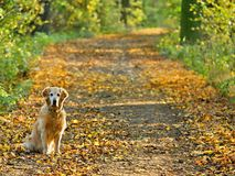 Dog on walk  in park Royalty Free Stock Image