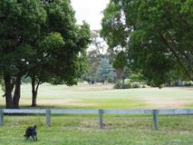Dog walk in park Royalty Free Stock Photo