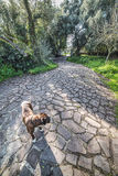 Dog on a walk path. In a domestic yard Royalty Free Stock Photography
