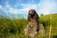 Dog for a walk Royalty Free Stock Photography