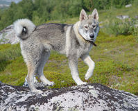 Dog on walk . The dog stands on a rock. Horizontal Stock Photo