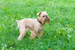 Dog on walk in the summer Stock Photos