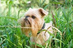 Dog on walk in the summer Stock Image