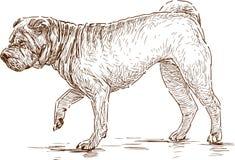 Dog on a walk Stock Photos