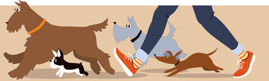 Dog walker banner Stock Photos