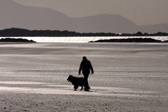Dog walker on the beach. Dog walker on the Cymyran beach on the Isle of Anglesey North Wales Stock Image
