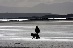Dog walker on the beach. Dog walker on the Cymyran beach on the Isle of Anglesey North Wales Stock Photo