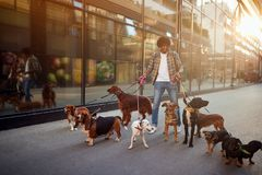 Dog walker enjoying with dogs while walking outdoors royalty free stock photography