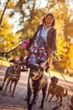 Dog walker enjoying with dogs while walking outdoors. Dog walker woman enjoying with dogs while walking outdoors stock photo