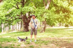 Dog walker enjoying with dogs while walking outdoors stock images