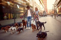 Dog walker girl and man dogs walks and enjoying outdoors stock image
