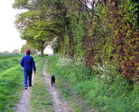 Dog walker on meadow lane Royalty Free Stock Image