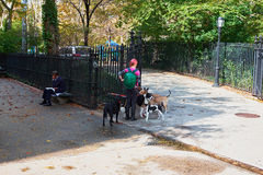 Dog walker in new york city. NEW YORK CITY - OCTOBER 16, 2014: woman dog walker at the entrance of St Vartan`s Park on 1st Avenue Royalty Free Stock Image