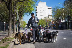 Dog walker Pasea Peros with a pack of dogs in a street of the San Telmo neighborhood in the city of Buenos Aires, Argentina. Buenos Aires, Argentina - October 8 Royalty Free Stock Image