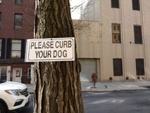 Dog Walker, Please Curb Your Dog, NYC, NY, USA. A woman walks her dogs in New York City as a car passes by. Posted on a nearby tree is a sign that says, `Please Royalty Free Stock Images
