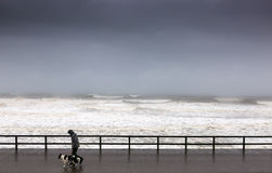 Dog Walker in Storm. A dog walker braves the stormy weather to walk his dog on Aberdeen beachfront Royalty Free Stock Photography