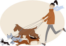Dog walker. Young woman running with a group of dogs of different breeds, vector cartoon, no transparencies stock illustration