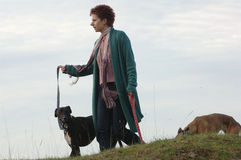 Dog walking. A woman taking dogs for a walk stock images