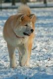 Dog Walking Stock Images