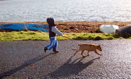 Dog Walking! Royalty Free Stock Photos