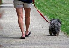 dog walking Стоковое Фото