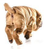 Dog walking away Stock Photos