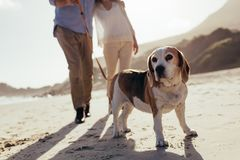 Dog walking on the beach with couple. Couple with pet dog on morning walk stock photos