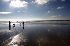 Dog walking on a beach in winter Royalty Free Stock Photos