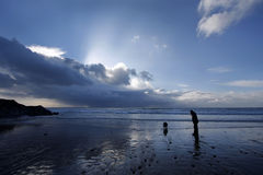 Dog walking on a beach in winter Stock Photo