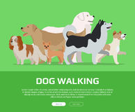 Dog Walking Concept Flat Style Vector Web Banner Stock Images