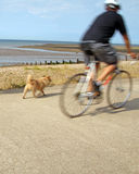 Dog walking cyclist Royalty Free Stock Photo