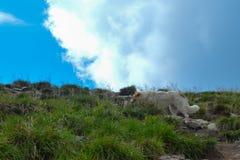 Dog walking final steps to Hoverla, the highest Ukrainian mountain. Carpathian mountains, Ukraine: Dog walking final steps to Hoverla, the highest Ukrainian stock images