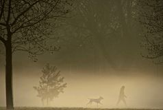 Dog walking on a misty morning. Dog walker and dog on a misty morning in one of the many urban parks world wide. A popular pastime world wide, with both benefits Stock Photos