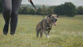 Dog Walking in Park, Slow Motion