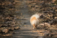 Dog walking on the road Stock Photo