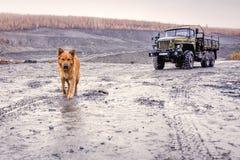 Dog walking through the sandy-clay road Royalty Free Stock Photos