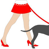 Dog Walking sexy legs woman Royalty Free Stock Image