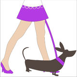 Dog Walking sexy legs woman Stock Images