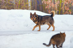 Dog walking on the snowy road un winter Royalty Free Stock Image