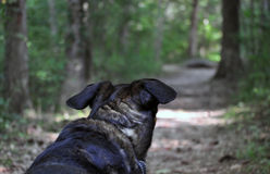 Dog walking the trail Royalty Free Stock Photography