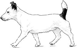 Dog walking stock illustration
