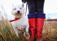 Dog Walking And Wellies Royalty Free Stock Images