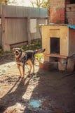Dog. Royalty Free Stock Image