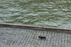 Dog walks the banks of river Seine, Paris Royalty Free Stock Photo